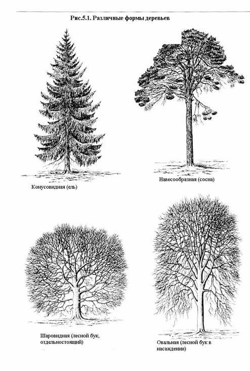 Как можно создать плакучие формы деревьев